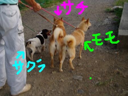 20070808-3.jpg
