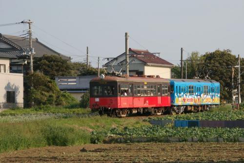 IMGP5247-inu0503.jpg