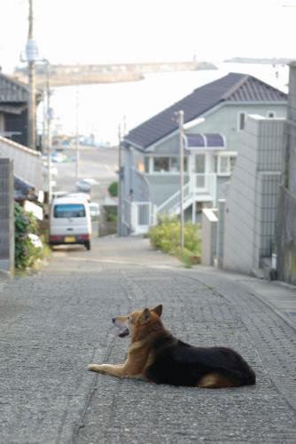 IMGP8579-tokawa1.jpg