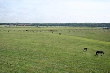 2007-0704-2.jpg