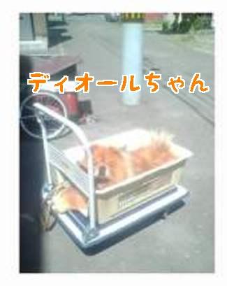 11_70926.jpg
