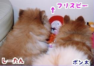 11_7814c-tanpopo.jpg