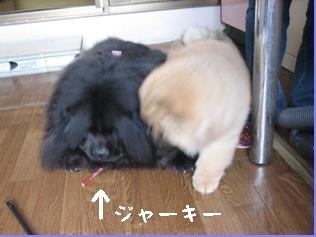 3.myu-070709.jpg
