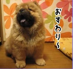 4_070729osuwari.jpg