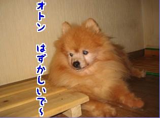 5_070723popo2.jpg