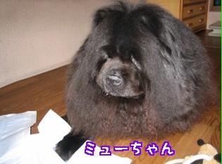 6.myu-070709.jpg