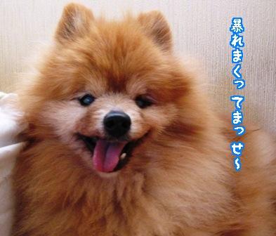 7.20070704popo1.jpg