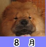 7822_8.jpg