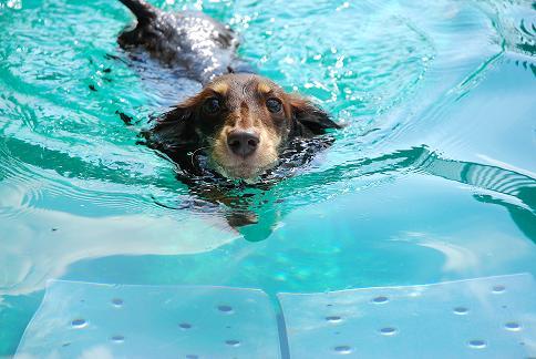 初めて泳いだ瞬間!