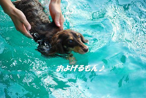 泳ぐ瞬間!