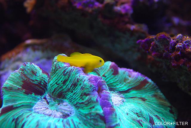 水族館の魚3