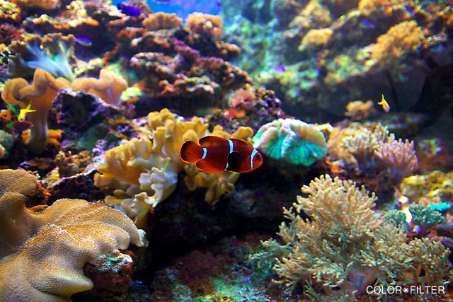 水族館の魚1