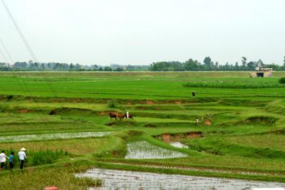 空港近くの農地
