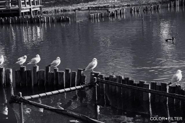 モノクロの鳥たち1