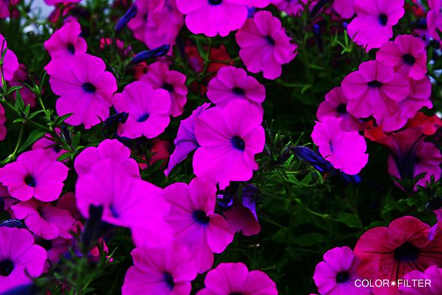 pinkpinkflowers