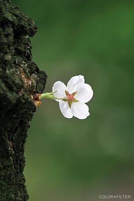 桜、そして・・・