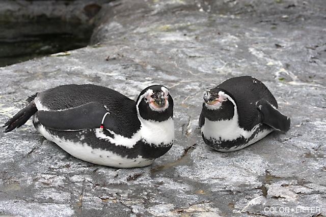 幸せそうなペンギン