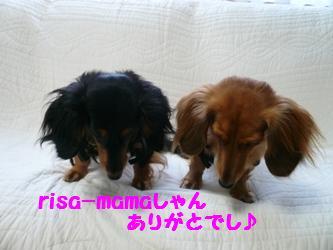 risa-mamaさんありがと