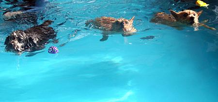 泳ぎますとも!