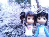 サクラ&Pinky:st.001