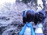 サクラ&Pinky:st.002