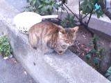アキバ猫06-002