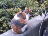 アキバ猫06-003