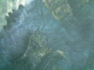 20061029212547.jpg