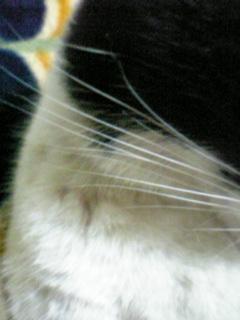 20061107215450.jpg
