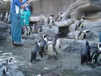 サンシャイン水族館(ペンギン)