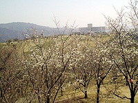 北郷町花立公園