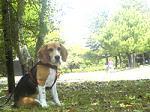 宮崎市民の森公園