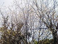 宮崎市天神山公園