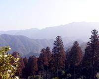 椿山森林公園01