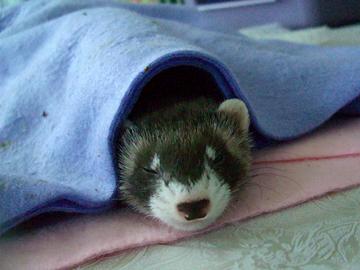 『わたし眠いのよ・・・』