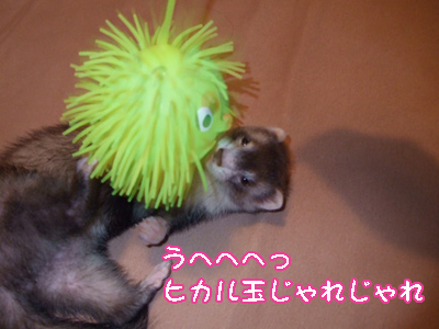 hikarutama_omocha.jpg
