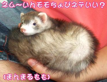 manmaru_momo.jpg
