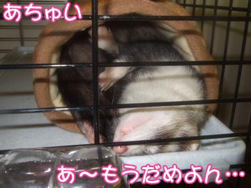 momo816-1.jpg