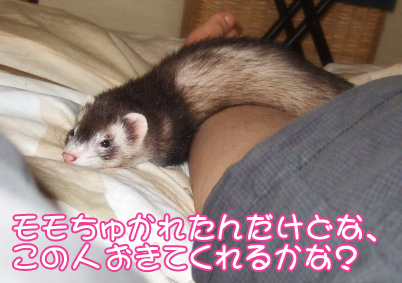 momo_809-1.jpg