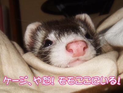 momo_809-6.jpg