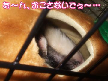 momo_821-4.jpg