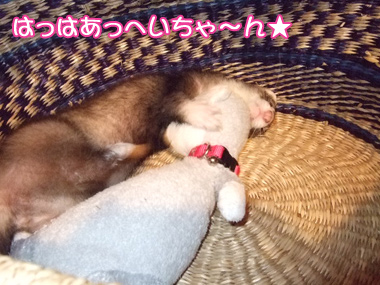 momo_basket3.jpg