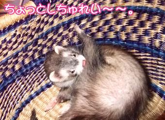 momo_basket5.jpg