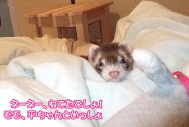 momo_bed3.jpg