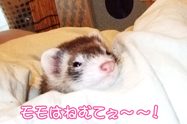 momo_bed4.jpg