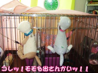 momo_cage1.jpg