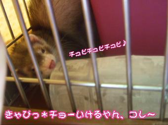 momo_cage2.jpg