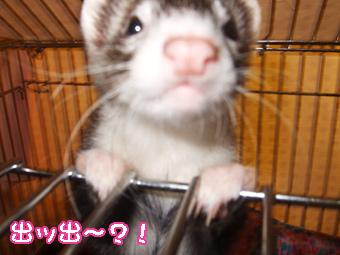 momo_cage3.jpg