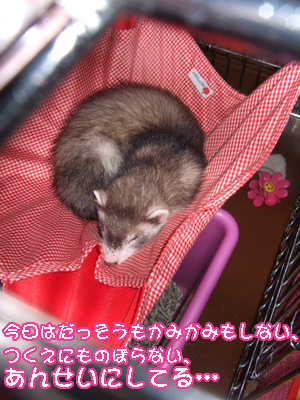momo_cyuusyago.jpg
