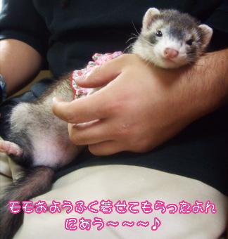 momo_fuku3.jpg